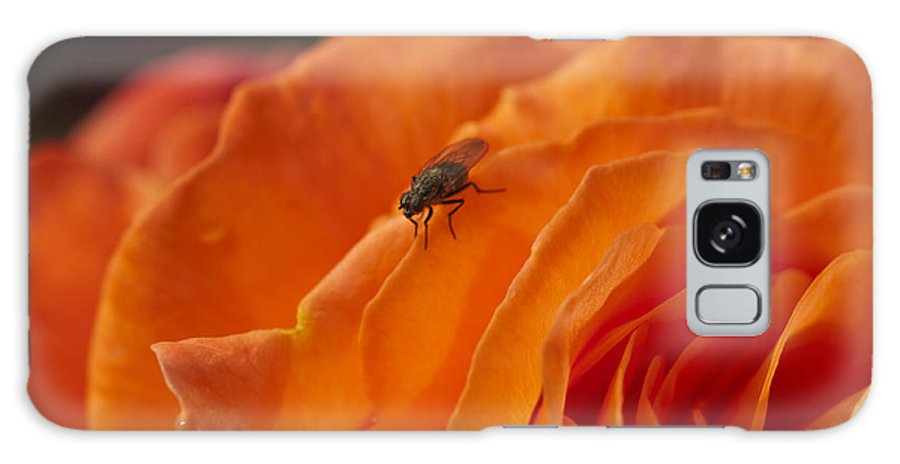 Orange Rose Galaxy S8 Case featuring the photograph Orange With Visitor by Steve Purnell
