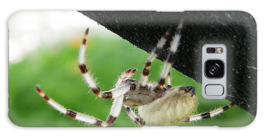 Spider Galaxy S8 Case featuring the photograph Orb Weaver by Peggy King