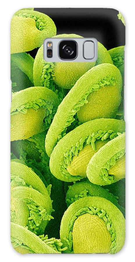 Epiphyllum Sp. Galaxy S8 Case featuring the photograph Orchic Cactus Ovules, Sem by Susumu Nishinaga