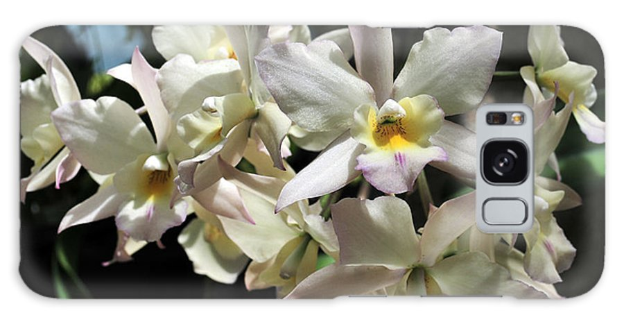 Flower Galaxy S8 Case featuring the photograph Orchid Iwanagara 9894 by Terri Winkler