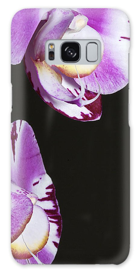 Orchid Galaxy S8 Case featuring the photograph Orchid Stem by Phyllis Denton