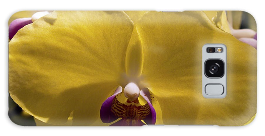 Fine Art Photography Galaxy S8 Case featuring the photograph Orchid Study Vi by Patricia Griffin Brett