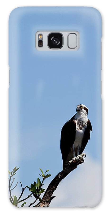 Osprey Galaxy S8 Case featuring the photograph Osprey by Michelle Constantine