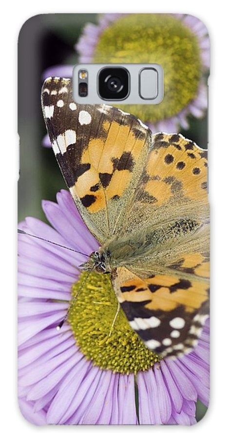 Painted Lady Galaxy S8 Case featuring the photograph Painted Lady Butterfly by Adrian Bicker