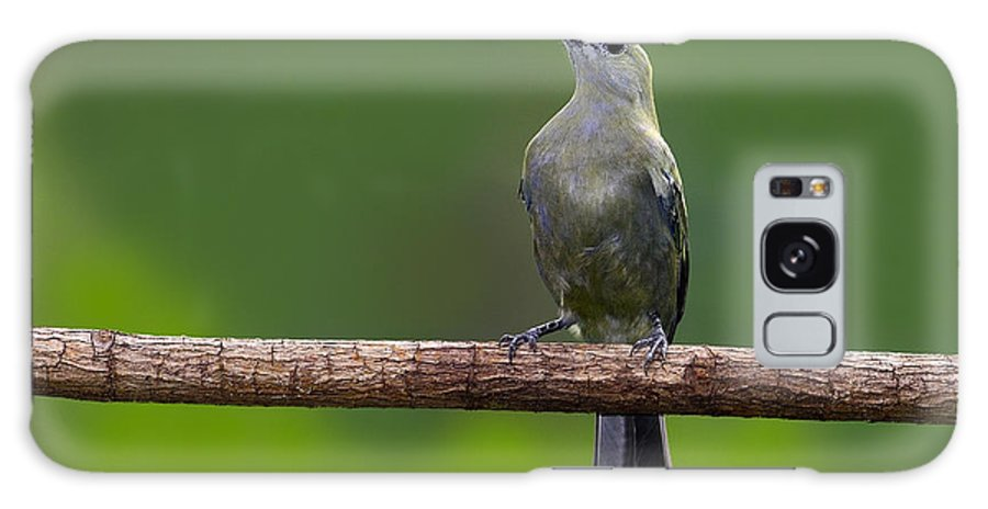 Palm Tanager Galaxy S8 Case featuring the photograph Palm Tanager by Tony Beck