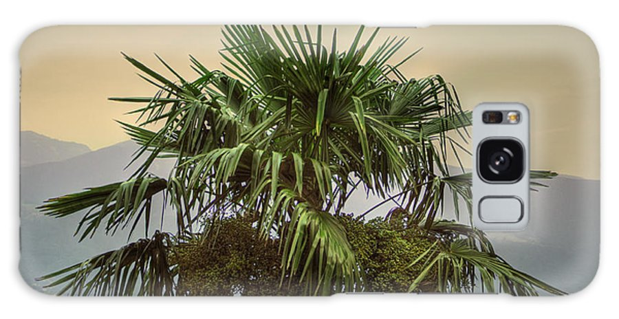 Palm Galaxy S8 Case featuring the photograph Palm Tree by Mats Silvan