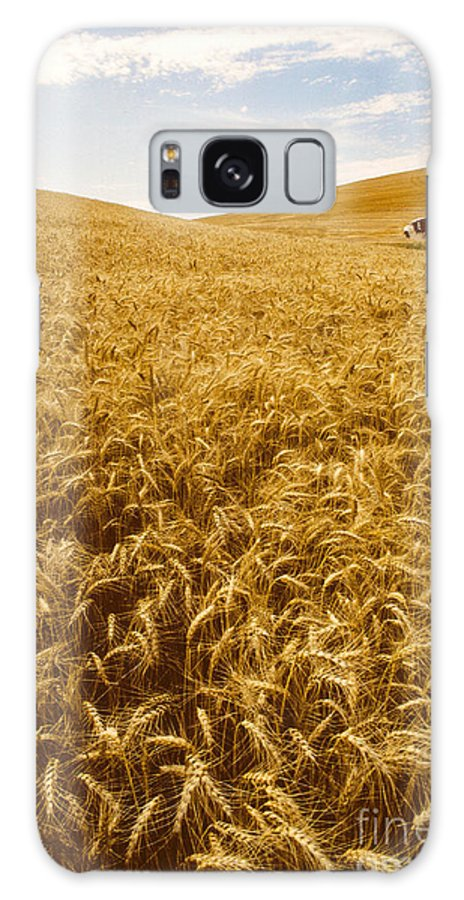 Wheat Galaxy S8 Case featuring the photograph Palouse Wheat by Photo Researchers