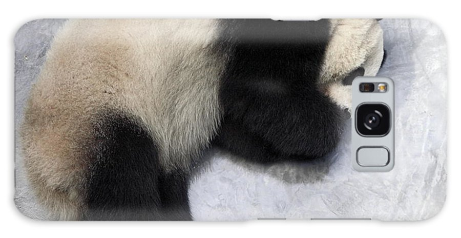 Giant Panda Bear Lying On Ground Galaxy S8 Case featuring the photograph Panda Paws by Sally Weigand