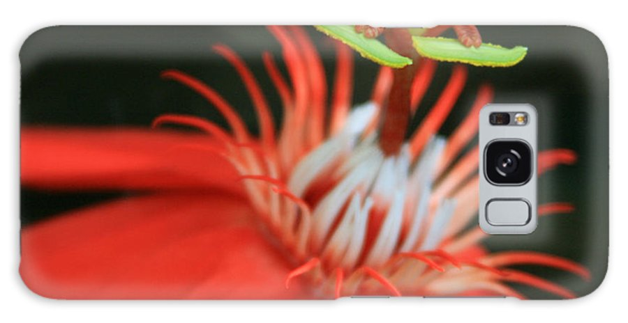 Aloha Galaxy S8 Case featuring the photograph Passiflora Vitifolia - Scarlet Red Passion Flower by Sharon Mau
