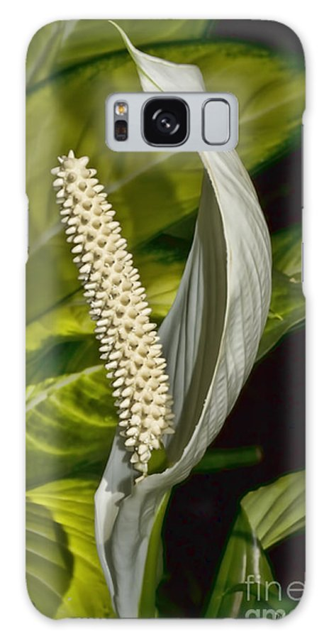 Lilly Galaxy S8 Case featuring the photograph Peace Everyone by Deborah Benoit