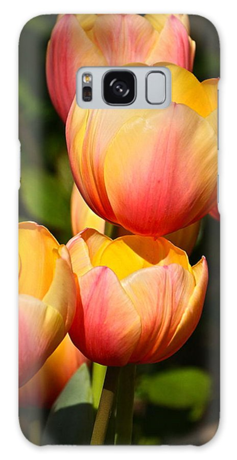 Tulip Array Galaxy S8 Case featuring the photograph Peachy Tulips by Byron Varvarigos