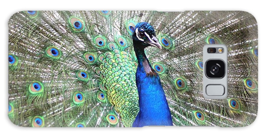 Birds Galaxy S8 Case featuring the photograph Peacock by Living Color Photography Lorraine Lynch