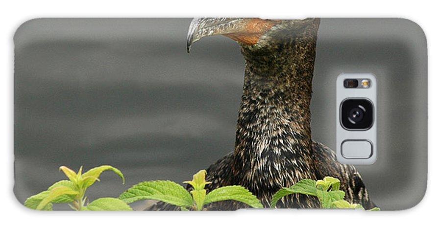Bird Galaxy S8 Case featuring the photograph Peak A Boo by Vivian Christopher