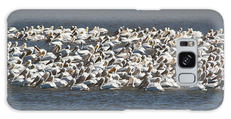 White Galaxy S8 Case featuring the photograph Pelican's Feeding by Roger Look