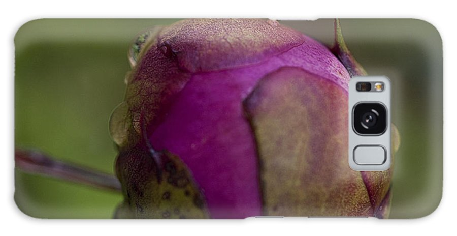 Lee Craig Galaxy S8 Case featuring the photograph Peony Bud by Lee Craig