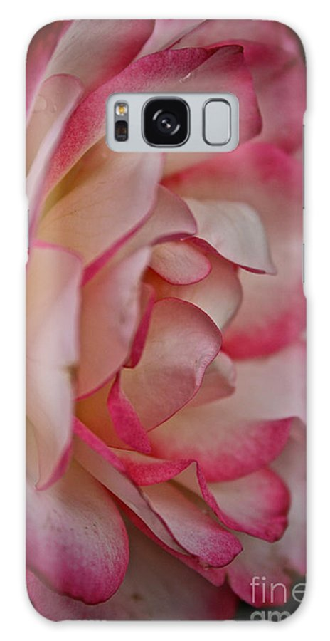 Garden Galaxy S8 Case featuring the photograph Peppermint Rose by Susan Herber