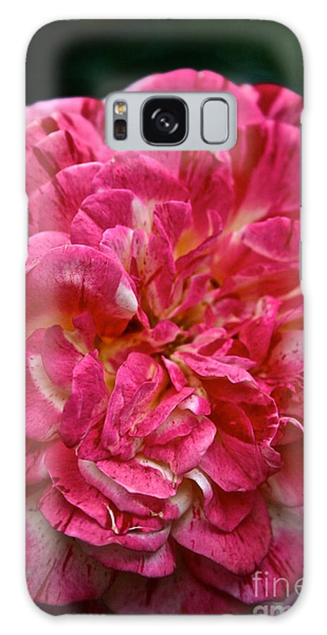 Garden Galaxy S8 Case featuring the photograph Petals Petals And More Petals by Susan Herber