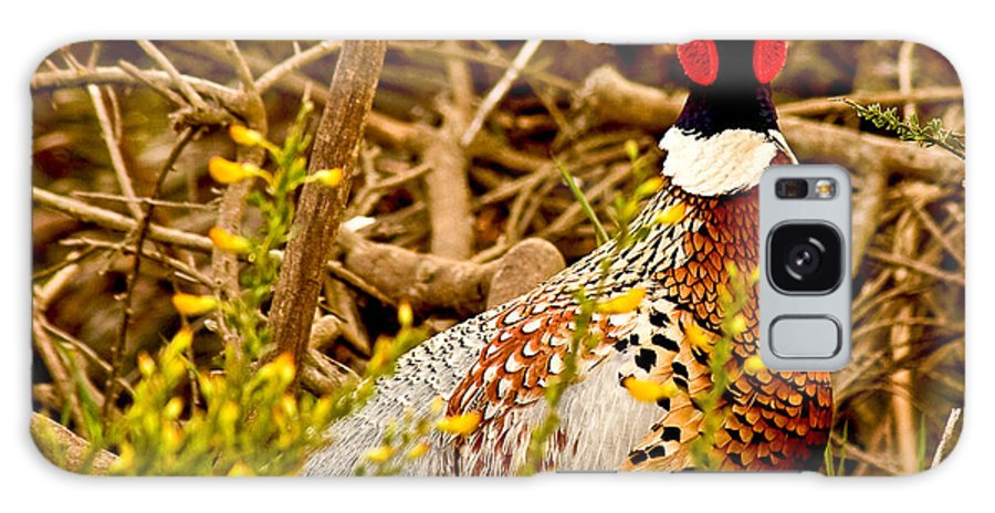Animals Galaxy S8 Case featuring the photograph Pheasant by Jean Noren