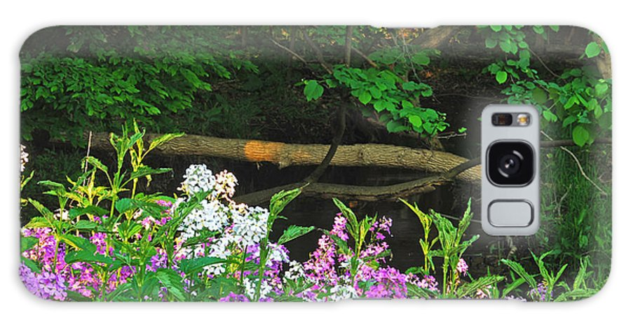 Phlox Galaxy S8 Case featuring the photograph Phlox Along The Creek 7185 by Michael Peychich