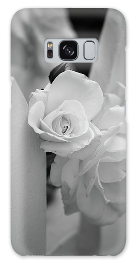 Black & White Galaxy S8 Case featuring the photograph Picket Rose by Peter Tellone
