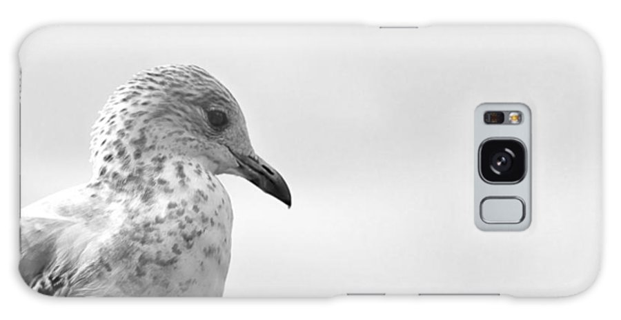 Bird Galaxy S8 Case featuring the photograph Pigeon Pride by Nicola Nobile