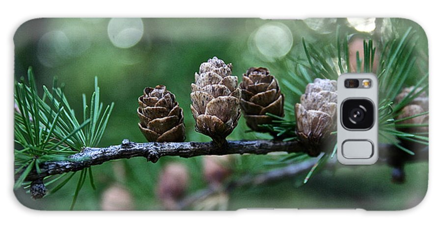 Plant Galaxy S8 Case featuring the photograph Pinecone Party Line by Susan Herber