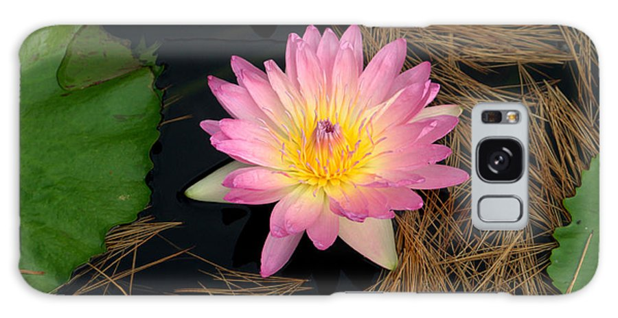 Water Lily Galaxy S8 Case featuring the photograph Pink And Yellow Water Lily by Mark Holden
