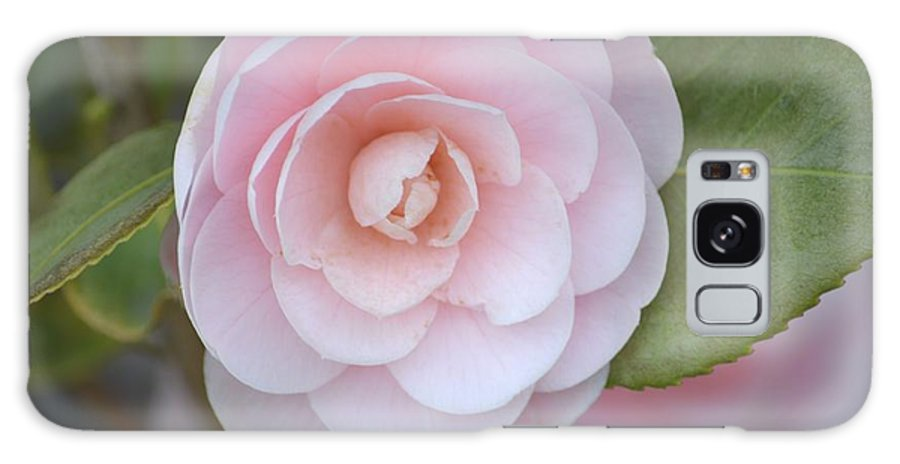 Pink Galaxy S8 Case featuring the photograph Pink Camellia Flower In Spring by P S