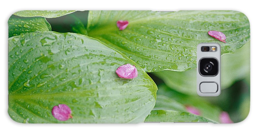 United States Of America Galaxy S8 Case featuring the photograph Pink Flower Petals Resting On Dew by Heather Perry
