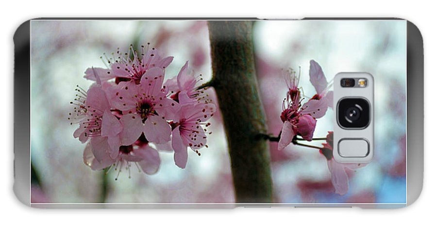 Flowers Galaxy S8 Case featuring the photograph Pink Flowering Tree In Spring Framed by P S