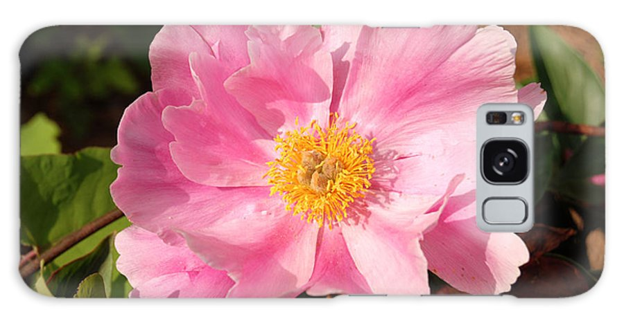 Pink Peony Flower Galaxy S8 Case featuring the digital art Pink Peony Flower by Eva Kaufman