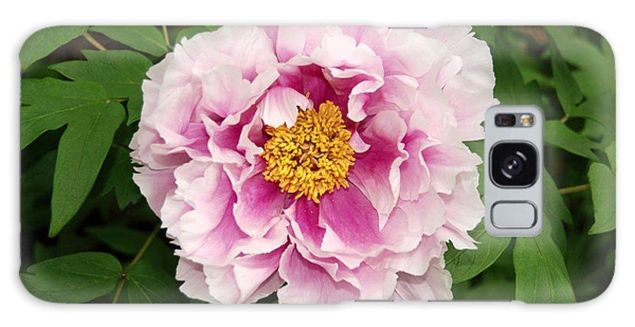 Pink Peony Flower Galaxy S8 Case featuring the digital art Pink Peony Flowers Series 1 by Eva Kaufman