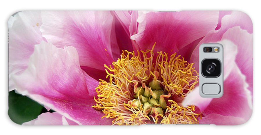 Pink Peony Flower Galaxy S8 Case featuring the digital art Pink Peony Flowers Series 8 by Eva Kaufman