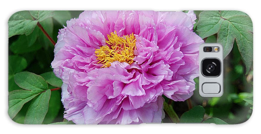Pink Peony Flower Galaxy S8 Case featuring the digital art Pink Peony Flowers Series 9 by Eva Kaufman