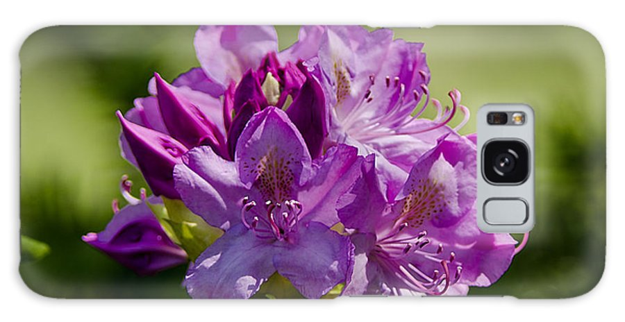 Usa Galaxy S8 Case featuring the photograph Pink Petals On The Trail by LeeAnn McLaneGoetz McLaneGoetzStudioLLCcom