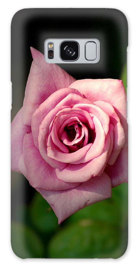 Flower Galaxy S8 Case featuring the photograph Pink Rose by David Weeks