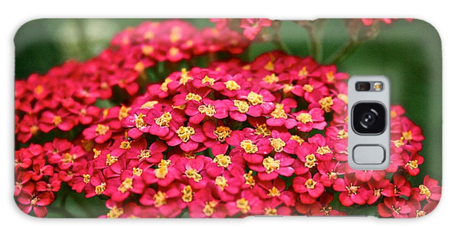Garden Galaxy S8 Case featuring the photograph Pink Yarrow by Susan Herber