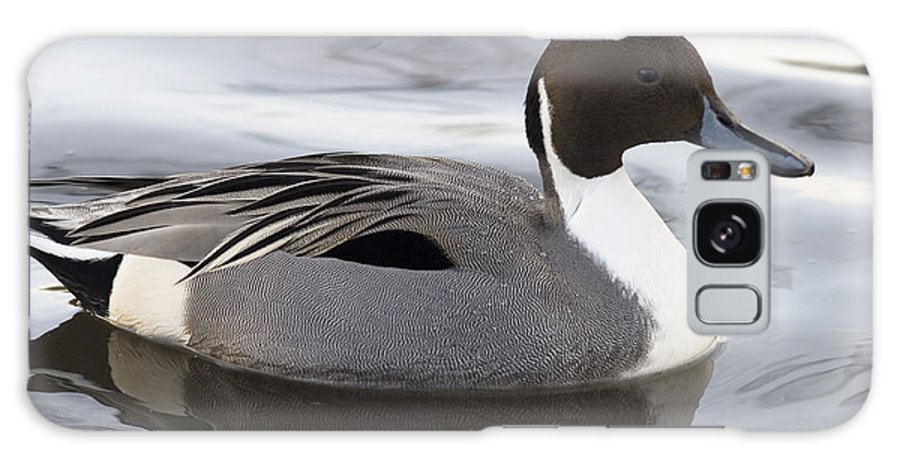 Anas Acuta Galaxy S8 Case featuring the photograph Pintail by Denise Swanson