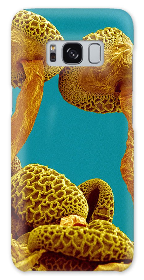 Pollen Tube Galaxy S8 Case featuring the photograph Pollen Tubes Of Lily Pollen, Sem by Susumu Nishinaga