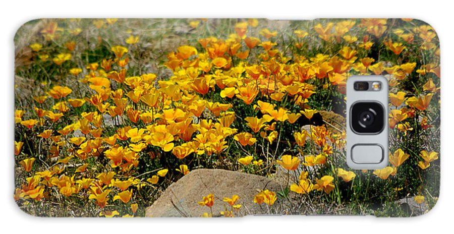 Photograph Galaxy S8 Case featuring the photograph Poppies Everywhere by Vicki Pelham