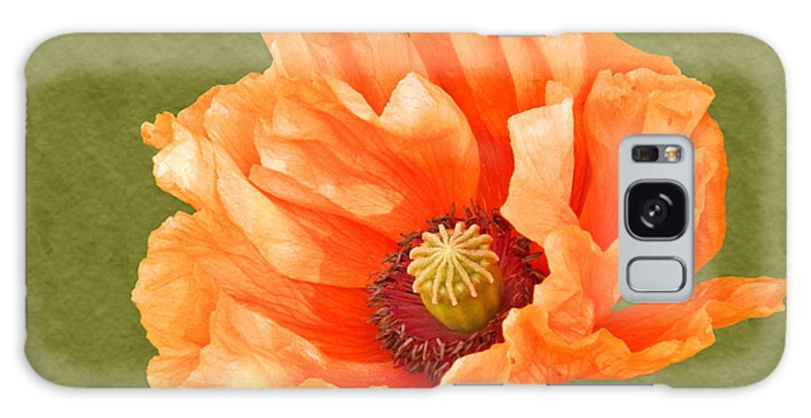Poppies Galaxy S8 Case featuring the photograph Poppy by Sharon Lisa Clarke