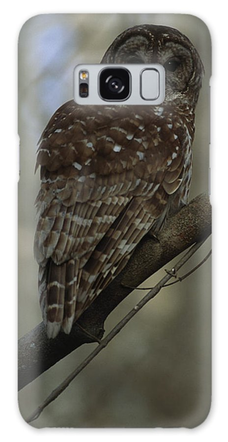 Stephensville Galaxy S8 Case featuring the photograph Portrait Of A Barred Owl Perched by Tyrone Turner
