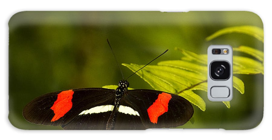 Butterfly Galaxy S8 Case featuring the photograph Postman Butterfly by Carrie Cranwill