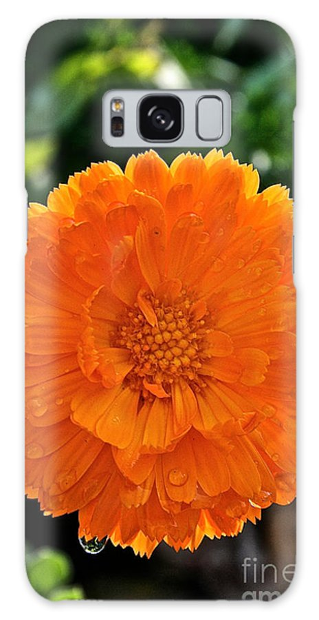 Outdoors Galaxy S8 Case featuring the photograph Pot Marigold by Susan Herber