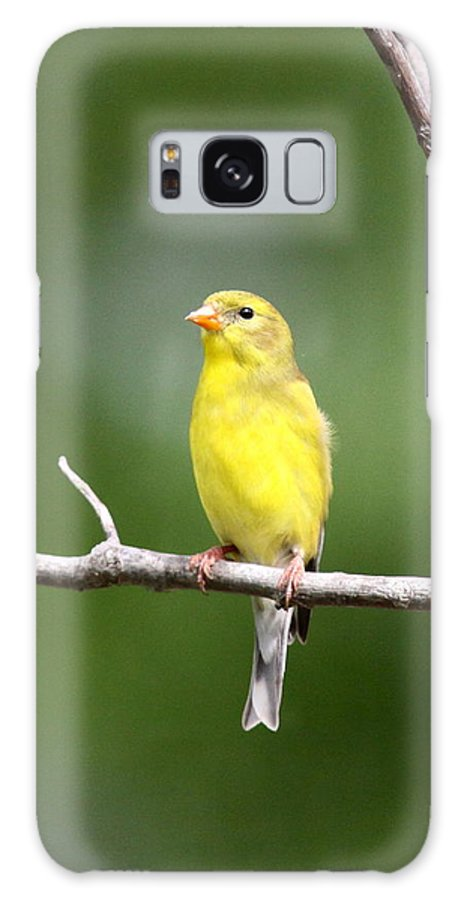 Goldfinch Galaxy S8 Case featuring the photograph Pretty Little Lady by Travis Truelove