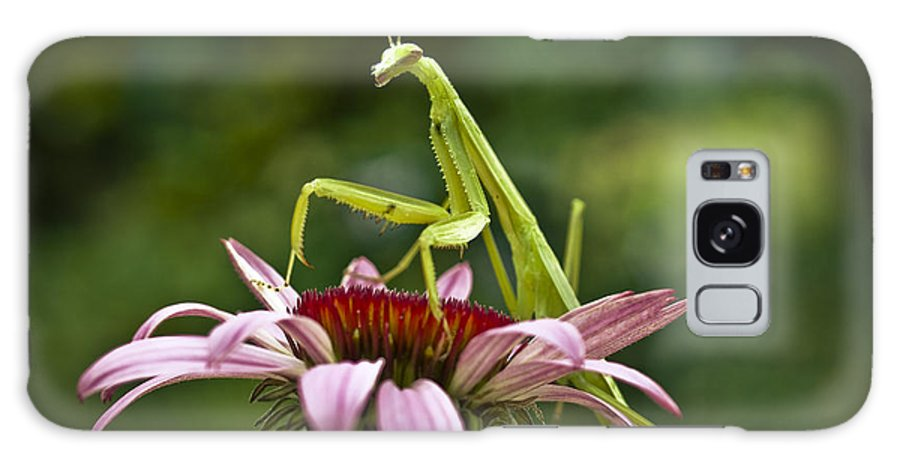 Insect Galaxy S8 Case featuring the photograph Preying Mantis by Cindy Lindow