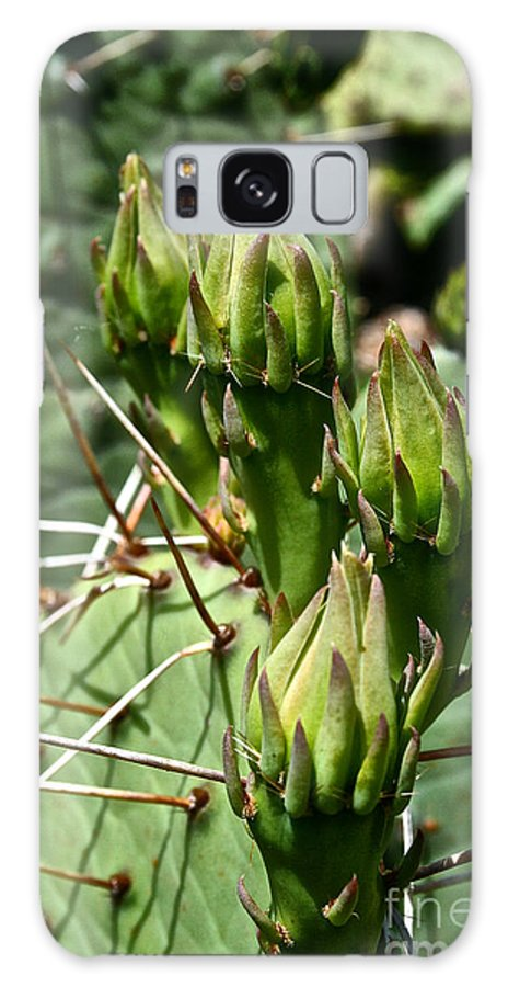 Outdoors Galaxy S8 Case featuring the photograph Prickly Pear Cactus Buds by Susan Herber