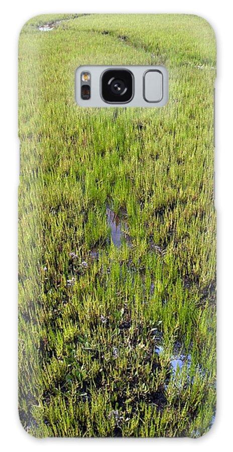 Purple Glasswort Galaxy S8 Case featuring the photograph Purple Glasswort (salicornia Ramosissima) by Adrian Bicker
