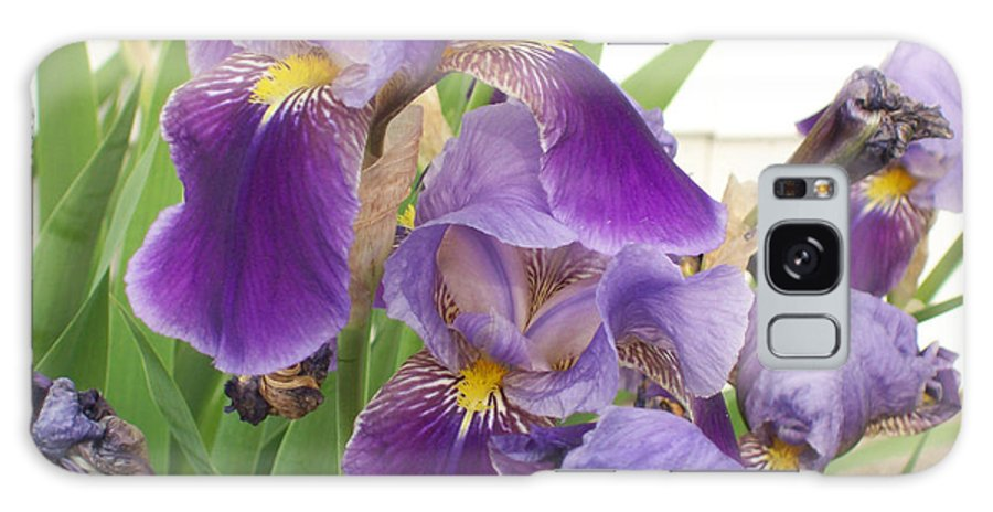 Flower Galaxy S8 Case featuring the photograph Purple Iris by Corinne Elizabeth Cowherd