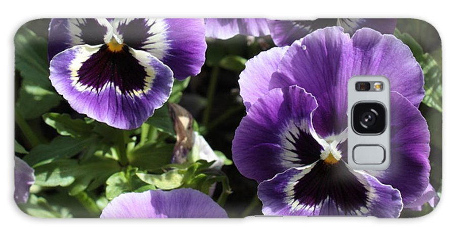 Pansy Galaxy S8 Case featuring the photograph Purple Pansies Square by Carol Groenen